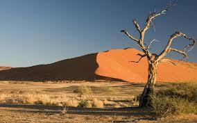 free photo of desert