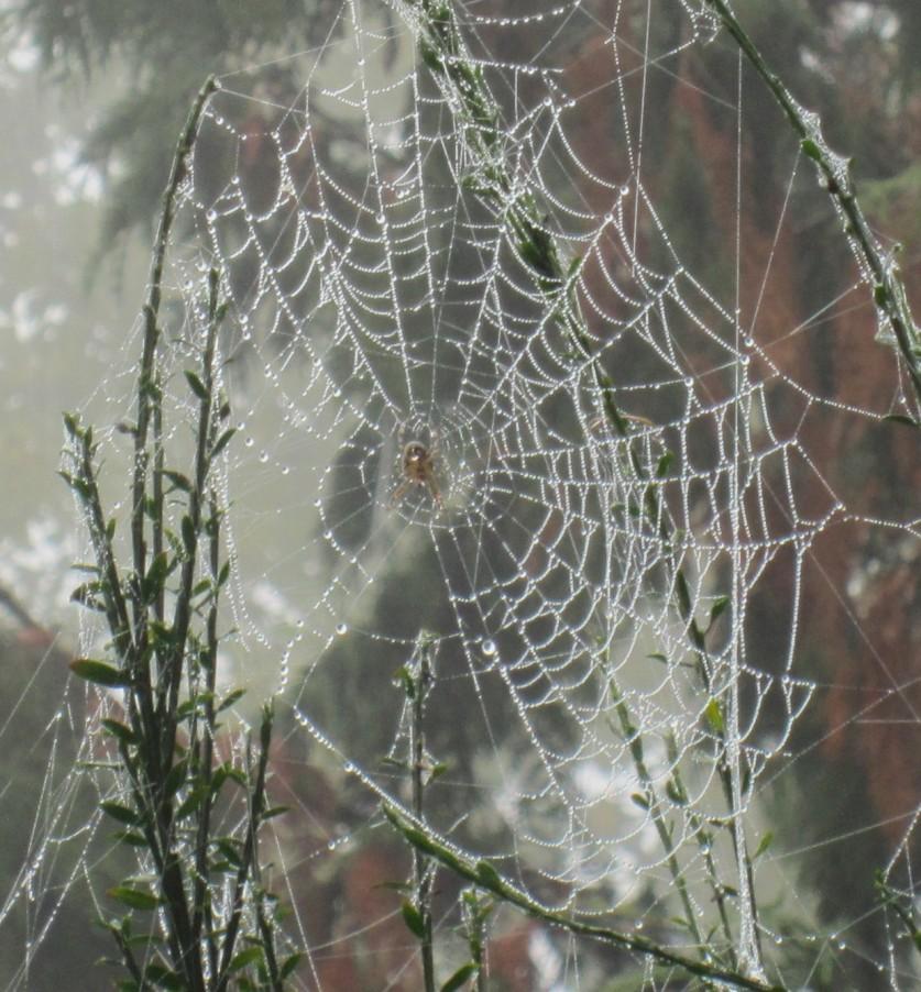 spider alone