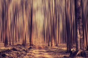 """""""Into the Woods"""" by Vinoth Chandar"""
