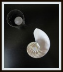 nautilaus shell on altar