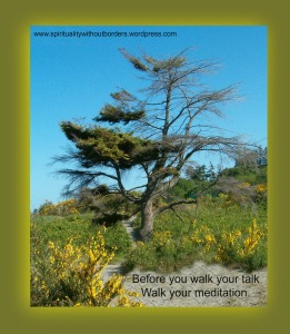 walk your meditation