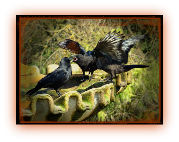 three crows at a fountain