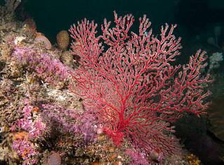 Underwater Garden 34628416992_f03d5bba42_n