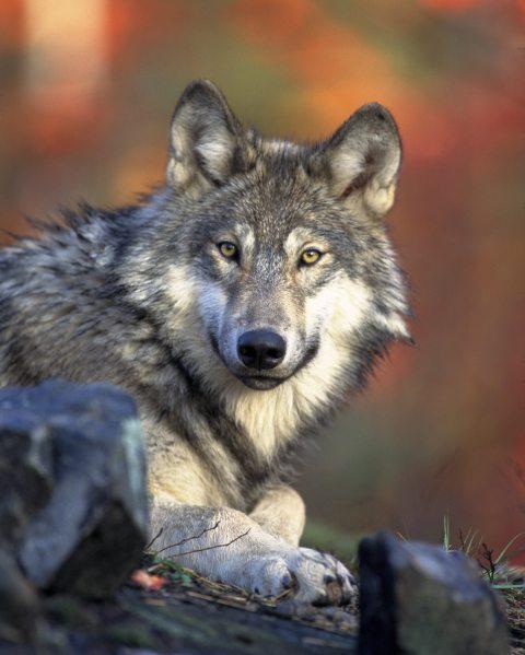 animal-hunter-nature-2361